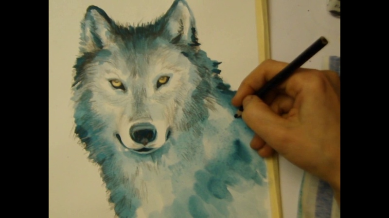 How to Draw a Wolf pencils watercolor как нарисовать волк come disegnare lupo a matita