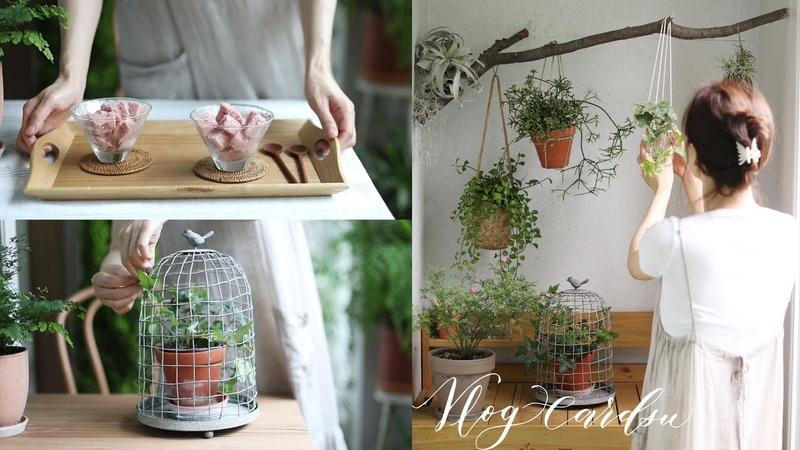 잊혀진 여름을 함께 한 베란다 정원 정리 쉽게 만드는 화분 행거살림 일상balcony g