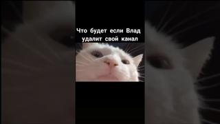 Кот качает головой под музыку/чёрный юмор