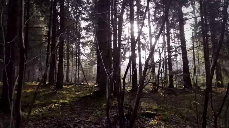 ПВД Отцеда-Столбцы 2-3.11.2019