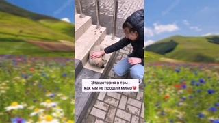 Удивительные спасения животных  -ТИК ТОК видео.