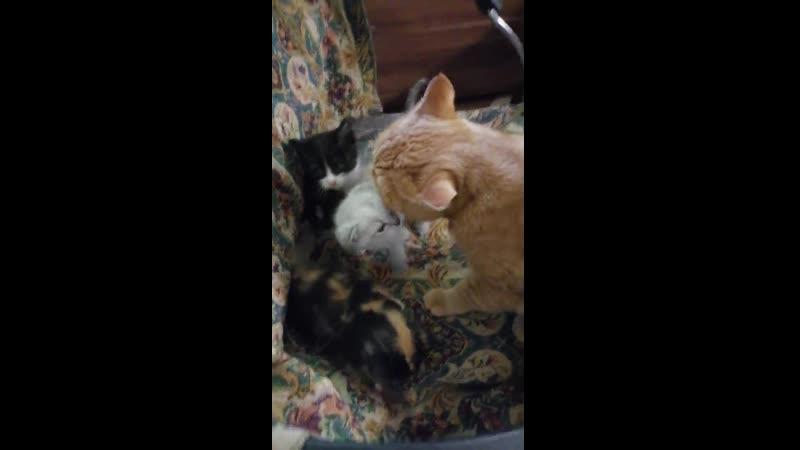 Котята с Громова