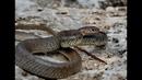 В жилой дом на Ставрополье заползла змея