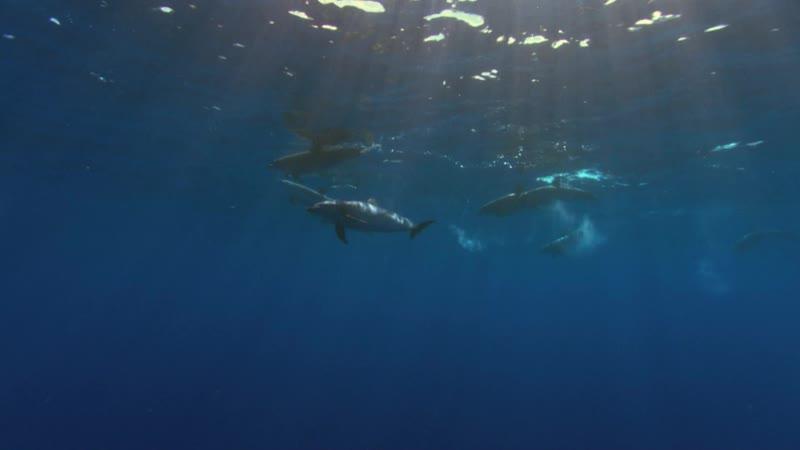 BBC Планета Земля 2006 11 серия Глубины океанов