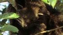 Таиланд глазами диких животных.National Geographic Таиланд Мир дикой природы Документальный фильм