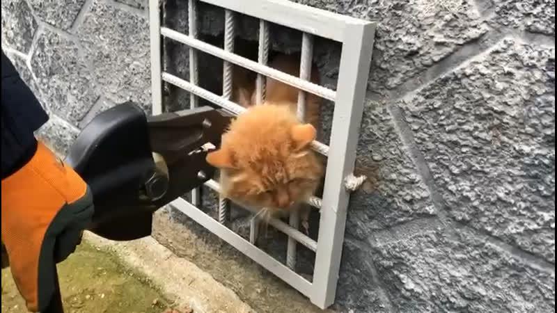 Рыжий кот застрял головой в решетке подвала в Подмосковье
