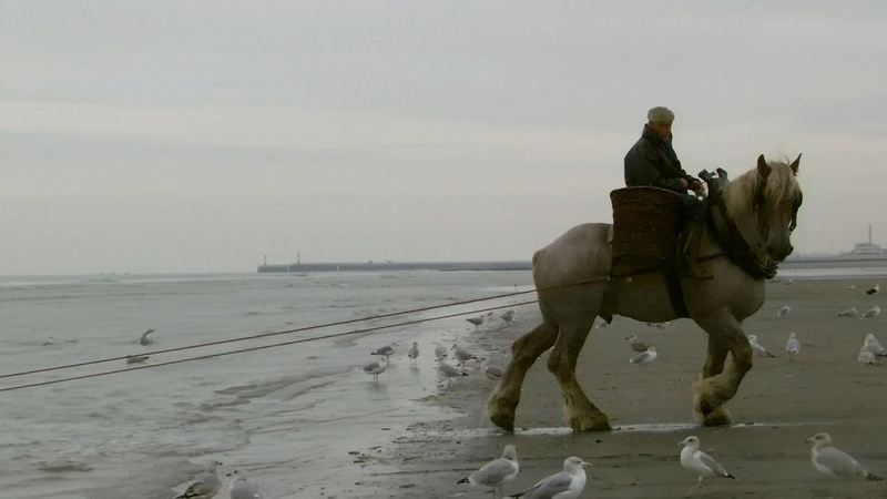 First lesson on horseback shrimp fishing with a funny ending