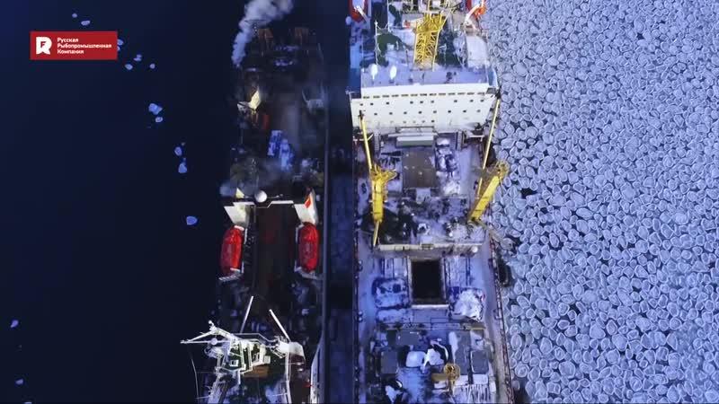 Минтай - главная промысловая рыба