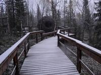 Официально заявляем - в Лесу сегодня наступила зима!