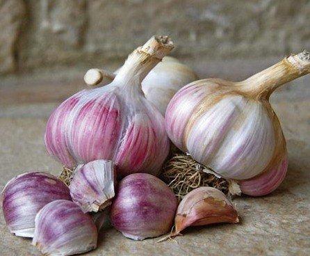 Советы по выращиванию чеснока