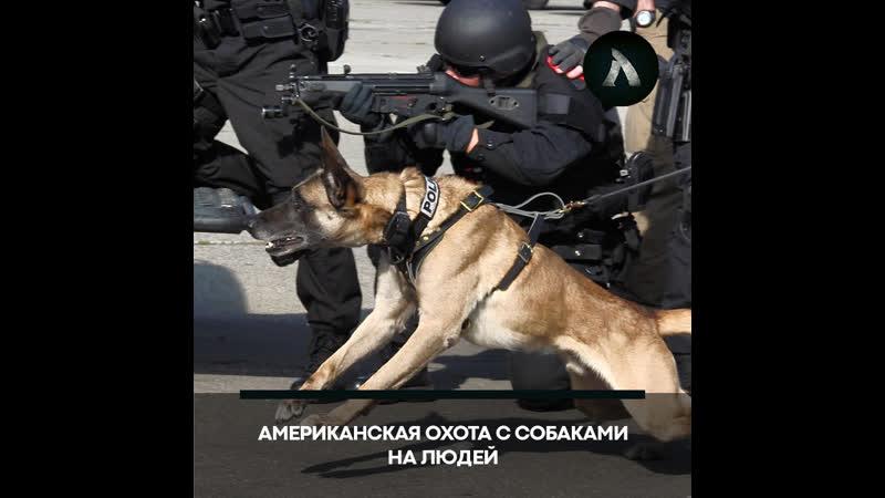 Полицейские натравили собаку на задержанного в США АКУЛА