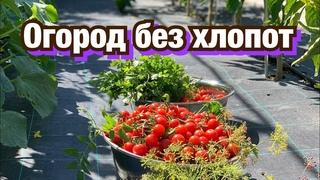 ХОЧУ МАЛОУХОДНЫЙ ОГОРОД! Выращивание овощей, клубники.
