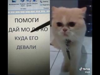 Кот орёт на весь дом! ,,помоги,  дай мо Ло кО!,  куда его ДЕВАЛИ!!! 😆