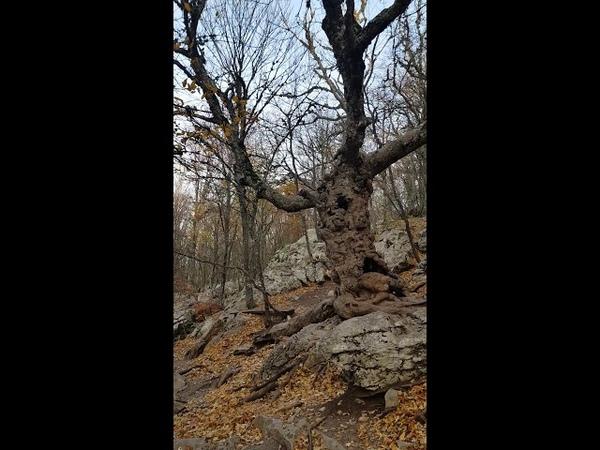 Дерево мёртвых из фильма Сонная Лощина 😁