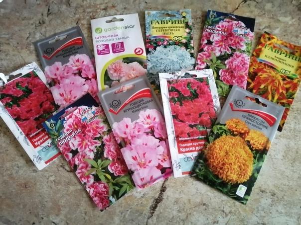 где можно заказать семена цветов эйвон