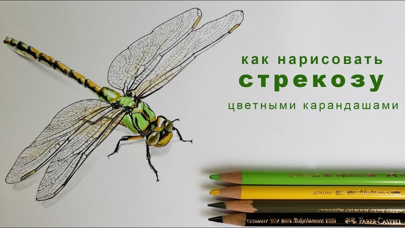 как нарисовать стрекозу поэтапно как нарисовать стрекозу цветными карандашами how to draw dragonfly
