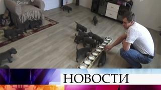 В Воронежской области хозяева собаки по кличке Кира неожиданно стали обладателями 18 щенков.
