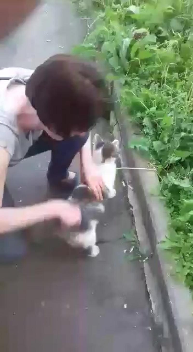 Кормление бездомных кошек!