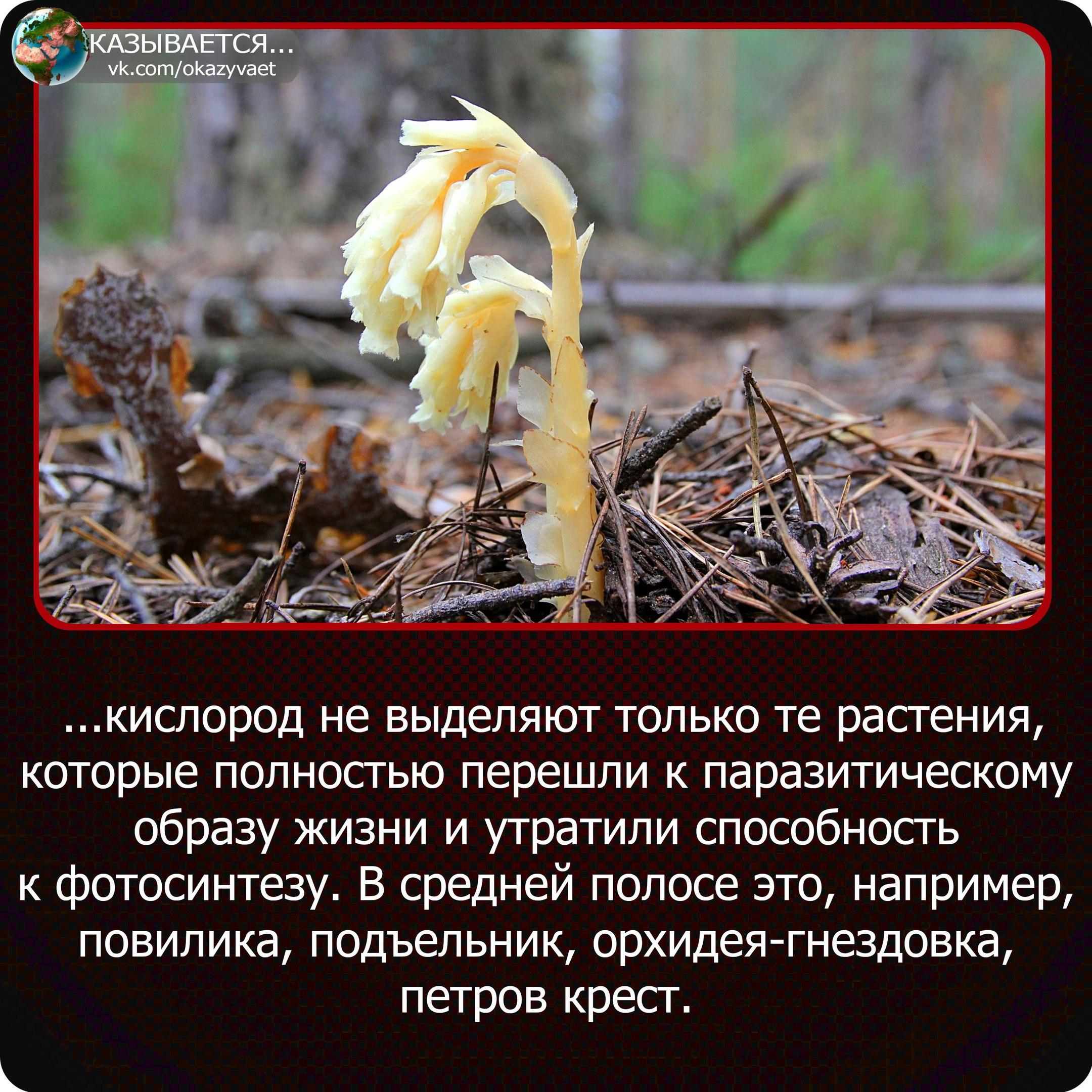 https://sun9-8.userapi.com/c543104/v543104275/3d05a/_skxN5FU-v4.jpg