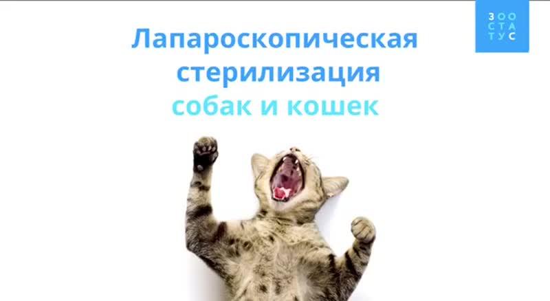 Лапароскопическая стерилизация собак и кошек