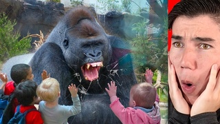 the gorilla broke the glass... then this happened...