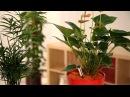 Comment rempoter vos plantes d'intérieur avec le granulat d'argile SERAMIS