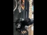 Wiwi bath