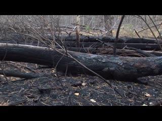 Почему горит лес в Тольятти