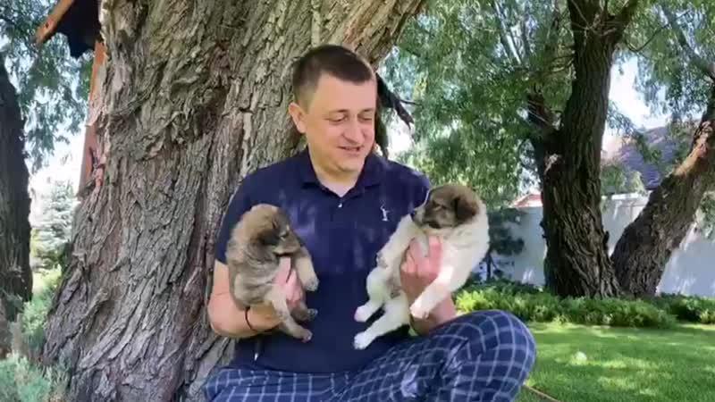 Поздравление Андрея Гимбатова с Днем Добровольца