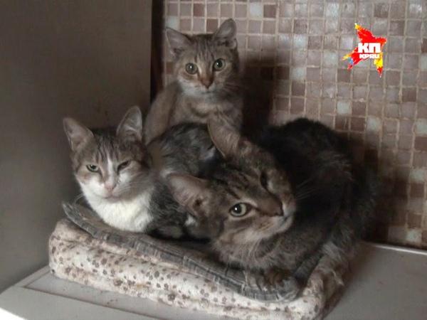 Жительница осажденной Горловки приютила более 30 брошеных кошек