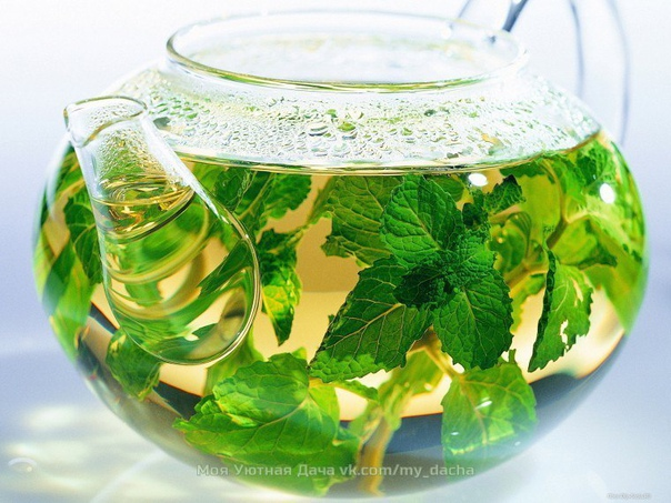 что лучше добавить в чай, чтобы получить максимум пользы и насладиться его ароматом 1. гвоздикаоблегчает головную боль и делает дыхание свежим. чай с гвоздикой поможет после трудного дня