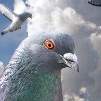 информатики картинка голубь анатолий готовом стеклопакете, как