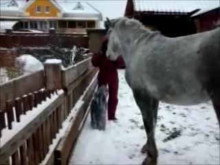 Снежок умеет носить не только тапки
