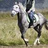 Конный слёт в  Кедрах Синегорья