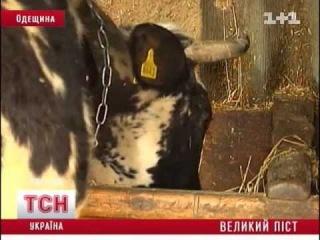 Роспотребнадзор запретил импорт сыров еще четырех украинских производителей