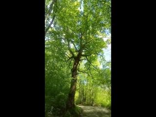 Пение птиц, Сочинский национальный парк