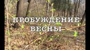 🌍ПРОБУЖДЕНИЕ ВЕСНЫ. НАРЫШКИНСКИЙ ПРУД В МОСКВЕ THE AWAKENING OF SPRING. NARYSHKIN POND IN MOSCOW