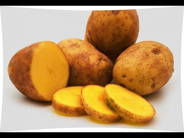 Замерзший картофель стал сладким что делать и как быть Даю совет полезные советы