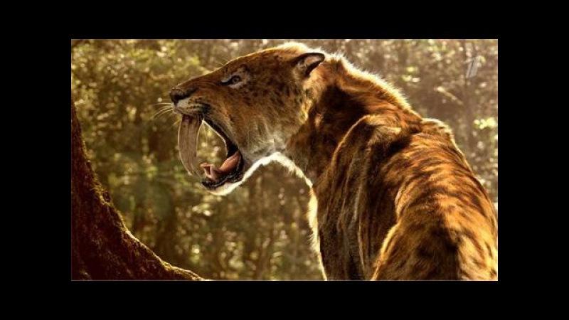 Доисторические хищники Саблезубый Тигр