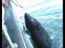 Прочитайте трогательную историю дельфина косатки по имени Луна