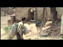 Таджикская песня Кишлак flv
