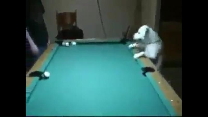 Perro Jugando Billar