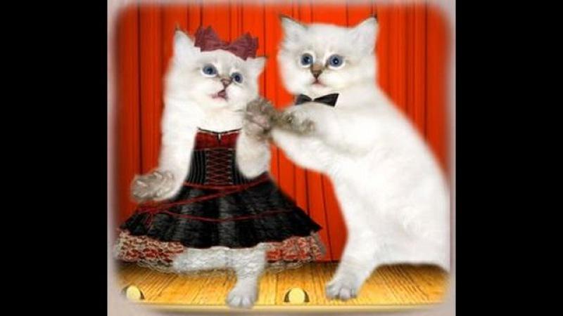 Музыкальный юмор. Кошачий вальс. Musical humor. Cat's Waltz. Music Sergey Chekalin. 猫のワルツ