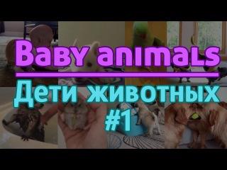 Милые детёныши животных | Baby animals | Эпизод #1 | Episode #1