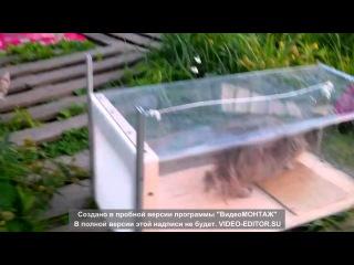 Живоловка для кошек, самодельная