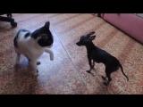Большой кот и маленькая собачка )))