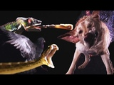 Animals In Slow Motion Earth Unplugged