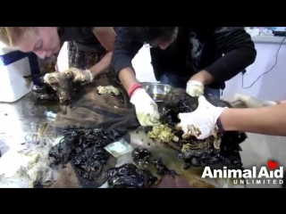 Stuck for hours in rock-solid tar, puppies rescued. Watch til the end..mp4