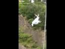 Лань Ван Цзи: I BELIEVE I CAN FLY
