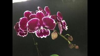 Посадка в грунт Цеофлора подростков орхидей из Азии. Sweet Candy и Woo Doo ч.1